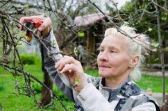 Η γυναίκα κόβει έναν κλάδο σε ένα Apple-δέντρο στον κήπο Στοκ φωτογραφία με δικαίωμα ελεύθερης χρήσης