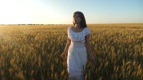 Η γυναίκα πηγαίνει πέρα από τον τομέα με το χρυσό σίτο ενάντια στον ουρανό φιλικός προς το περιβάλλον σίτος όμορφοι περίπατοι κορ απόθεμα βίντεο