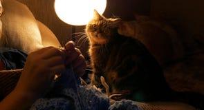 Η γυναίκα πλέκει μια κλειδαριά στο σπίτι, μια γάτα σε ένα υπόβαθρο μιας γυναίκας, ένα σπιτικό χόμπι Στοκ Φωτογραφίες