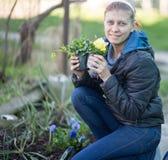 Η γυναίκα που φυτεύει το viola λουλουδιών στο α στοκ φωτογραφία με δικαίωμα ελεύθερης χρήσης
