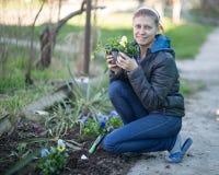 Η γυναίκα που φυτεύει το viola λουλουδιών στο α στοκ εικόνα