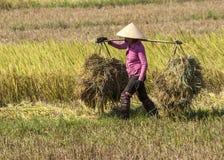 Η γυναίκα στο ρόδινο πουκάμισο φέρνει δύο σωρούς του αχύρου ρυζιού στον ώμο Στοκ εικόνα με δικαίωμα ελεύθερης χρήσης