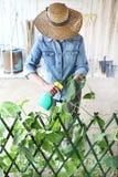 Η γυναίκα στο φυτικό κήπο ψεκάζει το φυτοφάρμακο στο φύλλο του φυτού με στοκ φωτογραφία με δικαίωμα ελεύθερης χρήσης