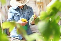 Η γυναίκα στο φυτικό κήπο ψεκάζει το φυτοφάρμακο στο φύλλο του φυτού, αυτοκίνητο στοκ φωτογραφία με δικαίωμα ελεύθερης χρήσης