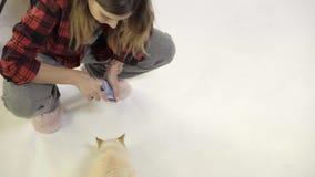 Η γυναίκα ταΐζει μια γάτα με τα συμπληρωματικά τρόφιμα της Pet φιλμ μικρού μήκους
