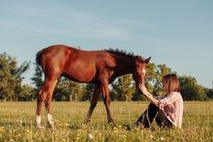 Η γυναίκα ταΐζει foal από τα χέρια της στοκ φωτογραφία