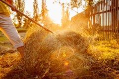 Η γυναίκα της Farmer συλλέγει το σανό με το pitchfork στο ηλιοβασίλεμα στην επαρχία Σκληρή δουλειά στο χωριό στοκ εικόνες