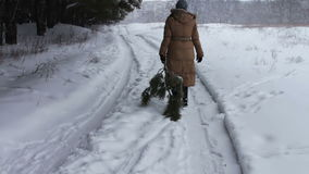 Η γυναίκα τραβά το καταρριφθε'ν χριστουγεννιάτικο δέντρο σε μια χιονώδη πορεία πίσω στο σπίτι απόθεμα βίντεο