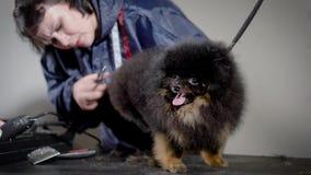 Η γυναίκα groomer τακτοποιεί την τρίχα του μαύρου μικρού χνουδωτού σκυλιού από το ψαλίδι στο επαγγελματικό σαλόνι καλλωπισμού, το φιλμ μικρού μήκους