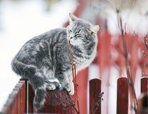 Η γλυκιά τιγρέ γάτα εχαΐδευσε σε έναν κλάδο την άνοιξη σε έναν φράκτη στοκ φωτογραφίες