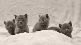 Η δέσμη των γατακιών που κάθονται σε ένα λευκό ρίχνει, απομονωμένο πορτρέτο φιλμ μικρού μήκους