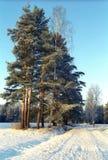 η διάβαση εχιόνισε δέντρα Στοκ Εικόνες
