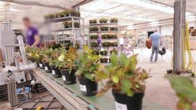 Η διαδικασία των αυτοκόλλητων ετικεττών αυτοκόλλητων ετικεττών στα δοχεία των λουλουδιών Χαρακτηρισμός των αγαθών στο εργοστάσιο φιλμ μικρού μήκους