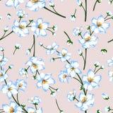 Η διανυσματική απεικόνιση του άνθους άνοιξη larde διακλαδίζεται άνευ ραφής σχέδιο Στοκ Φωτογραφίες