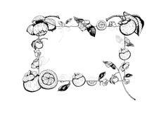 Η διανυσματική απεικόνιση του διαφανούς πλαισίου γυαλιού με mangosteen τα φρούτα, λουλούδια, φεύγει Χέρι που σύρεται σε γραπτό απεικόνιση αποθεμάτων