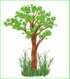 Η διανυσματική πράσινη χλόη δέντρων φυτεύει το φυσικό φρέσκο δάσος ζουγκλών κήπων με θάμνους στοκ εικόνες