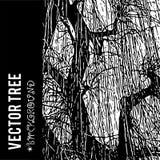 Η διανυσματική σκιαγραφία ενός δέντρου για το υπόβαθρο με τις φυσικές συστάσεις φυλλώματος Στοκ Φωτογραφία