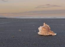 Η δροσερή Shell στην παραλία Στοκ Εικόνα
