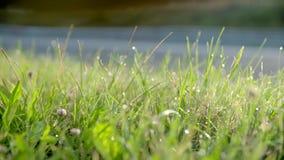 η δροσιά ρίχνει τη χλόη πράσι&nu απόθεμα βίντεο