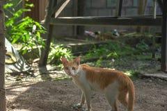 Η εγχώρια γάτα μου στις άγρια περιοχές κοιτάζει στοκ εικόνες με δικαίωμα ελεύθερης χρήσης