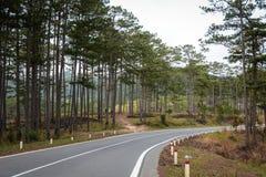 Η εθνική οδός βουνών με τα δέντρα πεύκων σε Dalat, Βιετνάμ Στοκ φωτογραφία με δικαίωμα ελεύθερης χρήσης