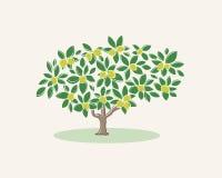 Η εικόνα ενός δέντρου λεμονιών σε ένα ελαφρύ υπόβαθρο Στοκ φωτογραφία με δικαίωμα ελεύθερης χρήσης