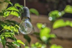 Η εικόνα του βολβού στην ηλιόλουστη ημέρα με πράσινο βγάζει φύλλα στο υπόβαθρο Στοκ φωτογραφία με δικαίωμα ελεύθερης χρήσης
