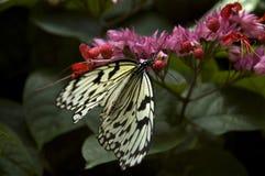 Η ειρήνη είναι μια πεταλούδα Στοκ φωτογραφία με δικαίωμα ελεύθερης χρήσης
