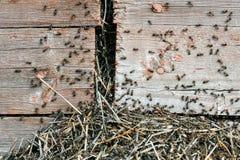Η εισβολή των μυρμηγκιών στοκ φωτογραφίες