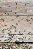 Η εισβολή των μυρμηγκιών στοκ εικόνα με δικαίωμα ελεύθερης χρήσης