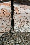 Η εισβολή των μυρμηγκιών στοκ εικόνες