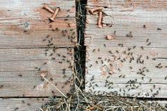 Η εισβολή των μυρμηγκιών στοκ εικόνα