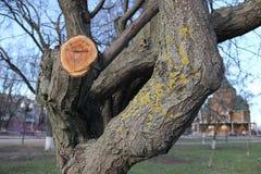 Η λειχήνα στο δέντρο Στοκ Φωτογραφίες