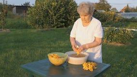 Η δεκαετία του '80 γυναικών καθαρίζει chanterelle τα μανιτάρια στο κύπελλο απόθεμα βίντεο