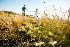 Η εκμετάλλευση ανδρών και γυναικών παραδίδει έναν τομέα των chamomiles Στοκ φωτογραφίες με δικαίωμα ελεύθερης χρήσης
