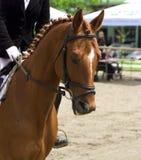 Η εκπαίδευση αλόγου σε περιστροφές αλόγων εμφανίζει Στοκ Εικόνα