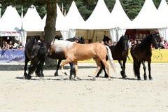 Η εκπαίδευση αλόγου σε περιστροφές αλόγων παρουσιάζει Στοκ φωτογραφίες με δικαίωμα ελεύθερης χρήσης