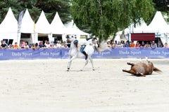 Η εκπαίδευση αλόγου σε περιστροφές αλόγων παρουσιάζει Στοκ Φωτογραφίες