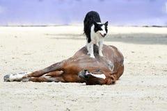 Η εκπαίδευση αλόγου σε περιστροφές αλόγων παρουσιάζει Στοκ φωτογραφία με δικαίωμα ελεύθερης χρήσης