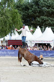 Η εκπαίδευση αλόγου σε περιστροφές αλόγων παρουσιάζει Στοκ εικόνες με δικαίωμα ελεύθερης χρήσης