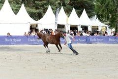 Η εκπαίδευση αλόγου σε περιστροφές αλόγων παρουσιάζει Στοκ εικόνα με δικαίωμα ελεύθερης χρήσης