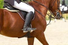 η εκπαίδευση αλόγου σε περιστροφές πειθαρχίας έντυσε τον ιππικό ολυμπιακό ρεαλιστικό αθλητισμό εικόνας αμαζωνών αλόγων παιχνιδιού Στοκ Εικόνα