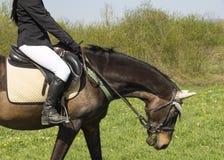η εκπαίδευση αλόγου σε περιστροφές πειθαρχίας έντυσε τον ιππικό ολυμπιακό ρεαλιστικό αθλητισμό εικόνας αμαζωνών αλόγων παιχνιδιού Στοκ Φωτογραφία