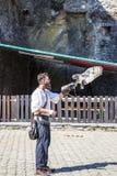 Η εκτροφή γερακί παρουσιάζει στο Castle της σούπας, Βέλγιο στοκ εικόνες με δικαίωμα ελεύθερης χρήσης