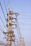 Ηλεκτροφόρα καλώδια, ηλεκτρικοί πύργοι μετάδοσης Στοκ Εικόνα