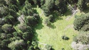Η εναέρια κάμερα άποψης κινείται από κατά μήκος του πράσινου δάσους των πυκνών μικτών κορυφών δέντρων των δέντρων και των σημύδων φιλμ μικρού μήκους