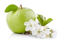 Η ενιαία πράσινη Apple με το φύλλο και τα λουλούδια  Στοκ φωτογραφία με δικαίωμα ελεύθερης χρήσης