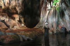 Η ενυδρίδα στέκεται κατακόρυφα στα οπίσθια πόδια της στο νερό από την τρύπα στο βράχο στοκ εικόνες με δικαίωμα ελεύθερης χρήσης