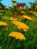 Η εξάλειψη των μελισσών Στοκ φωτογραφία με δικαίωμα ελεύθερης χρήσης