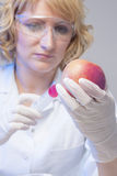 Η εξεταστική γενετική τροποποιημένη Apple Στοκ Εικόνα
